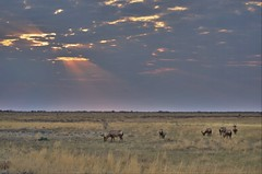 (alicemichel) Tags: hdr hartebeest red clouds sun light rays