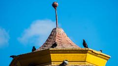 en lo mas alto (Garojar) Tags: palomas pergola plaza antofagasta chile paloma ave