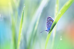 Fly with me (Marilena Fattore) Tags: macro artistic canon tamron colors nature closeup focus floralart butterfly light blue pastel green yellow orange papillons mariposa delicate softness garden animals grass brilliance