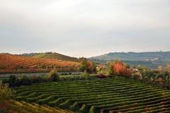 Profumo di vino nell'aria - Scent of wine. (sinetempore) Tags: profumodivinonellaria scentofwine vino wine vigneti vineyards barolo langhe autunno autumn nuvole clouds