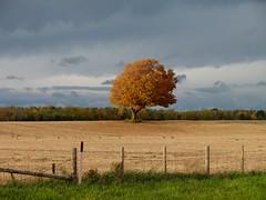 autumn (sonyacita) Tags: tree autumn