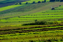 Fields in the Beskidy Mountains (Hejma (+/- 5400 faves and 1,7 milion views)) Tags: poland beskidy fields haymaking meadows green tree hill september