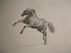 Horse - rendered drawing (# annola) Tags: disegno dessin zeichnen drawing nhi101x nhi illustration horse cavallo cheval pferd pencil matita crayon bw bleistift