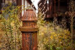 Hydrate (ranzino) Tags: eastbroadtoprailroad furnacehills pa rockhillfurnace growth hydrant plants rockhill pennsylvania unitedstates us