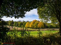 Autumn Comes but Once a Year. (TDR Photographic) Tags: dorset england thedorsetrambler uk autumn framing landscape light possibles trees
