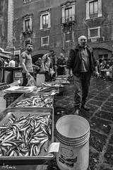 _DSC2664 (artlele) Tags: catania mercato market blackandwhite black white traditional sicilia sicily italia italy history streetphotografie street streetlife fishermen fish life true truelife work fishmarket reportage