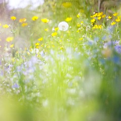 Spring colours (Saori_) Tags: film rolleiflex czech praha prague spring