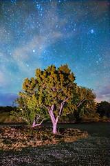 ([ raymond ]) Tags: americansouthwest newmexico night outdoors southwest stars tree img9275 juniper