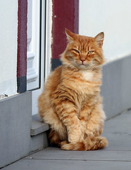 What's up (vic_206) Tags: chat cat funny cute lol explore azores terceira canoneos7d canon70200f28lisii