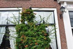 Pigeon tree (Michiel2005) Tags: pigeon duif vogel duiven pigeons dier animal bird leiden nederland netherlands holland