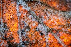 Piège de crystal (Thomas Vanderheyden) Tags: abstract abstrait colors couleur fujifilm glace ice macro nature tamron90mm thomasvanderheyden xt1 crystal orange