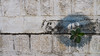 PeeVee Walks 25K KG Towers-1040263 (peevee@ds) Tags: city bangalore boundary peevee kempe gowda kempegowda bengaluru 25kmwalk peeveewalks25k
