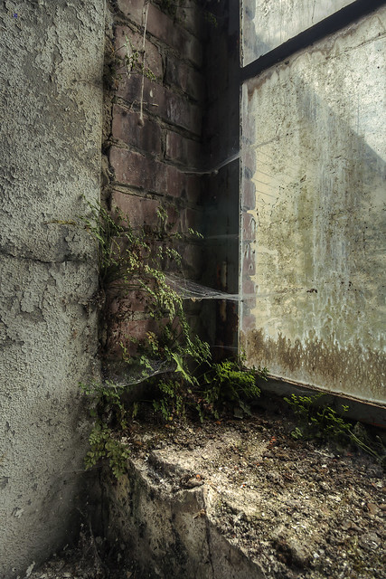 window ecosystem decoration