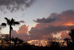 Monsoon FAIL! (zoniedude1) Tags: light sunset summer arizona sky southwest color nature phoenix beauty weather skyline clouds skyscape evening colorful view desert sundown silhouettes dry palmtrees mybackyard skyshow rooftopview azsky stormyskies thunderheads monsoonseason valleyofthesun rooftopsunset norainhere arizonamonsoon zoniedude1 arizonapassages monsoonsunset southwestmonsoon arizonathunderstorms earthnaturelife canonpowershotg12 monsoon2015 zeroprecipitation zd1weatherstation monsoonfail