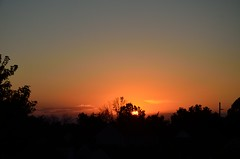 DSC_2312 (bfaling) Tags: trees columbus ohio red summer orange sun yard sunrise back glow neighborhood oh 2015