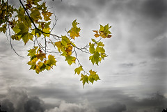 Otoño en Sierra de Madrid (Jorgibiris) Tags: hojas nikon amarillo cielo nubes árbol tormenta otoño d200 nikonflickrawardgold