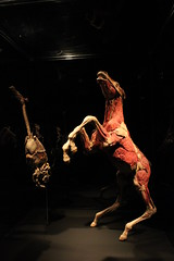 Science World - October 15, 2015 (rieserrano) Tags: bodyworlds plastination