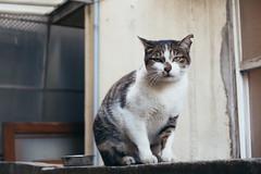 _DSC0742 (**) Tags: cat sony taiwan taichung    markiii  rx100  rx100m3