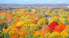 Mount Auburn Cemetary (Brooks Payne) Tags: autumn trees color colour fall nature leaves boston architecture landscape geotagged ma outdoors woods colorful colours afternoon massachusetts sony cemetary newengland cybershot foliage bostonma brooks mtauburn nationalhistoriclandmark rx100 brooksbos rx100m2 dscrx100m2