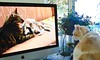 Tessa Watches YouTube And ... (I Flickr 4 JOY) Tags: cat tessa pest youtube catandkitten catwatchingyoutube anotherpest