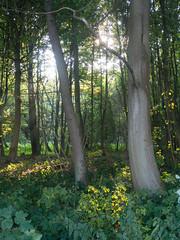 Am Brodtener Ufer (Teelicht) Tags: brodten brodtenerufer deutschland germany lbeck schleswigholstein travemnde luebeck travemuende wald wood