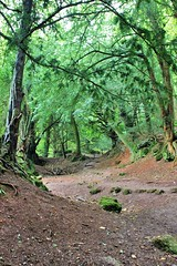 Puzzle Wood (zoe toseland) Tags: uk trees west nature arthur woods south puzzle merlin tolkien wppd