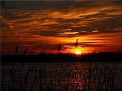 Sunset   today (Ostseetroll) Tags: sunset lake water geotagged deutschland see wasser sonnenuntergang deu schleswigholstein scharbeutz pnitzamsee geo:lat=5403827106 geo:lon=1069805574