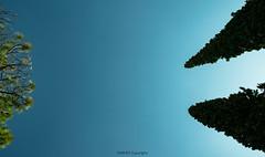 UET (Mustafa Chaudhry) Tags: trees pakistan sky landscape nikon pk punjab taxila uet 140mm d5300 civildepartment uettaxila
