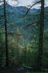 Altai Mountains, Kara-Turek pass (Black Heart) (Oleg Olden) Tags: trees mountain mountains film nature analog landscape kodak outdoor slide konica hexar rangefinders kodake100g konicahexaras