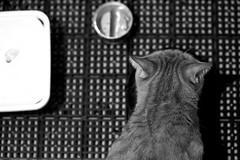 Alone (vicnobody) Tags: bw pet cats white black cat