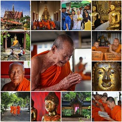 Buddism in Thailand (Bn) Tags: life old school portrait people man face collage thailand religious pain amazing search movement fdsflickrtoys topf50 god nirvana expression bangkok mosaic buddha buddhist religion crying deep monk buddhism best collection thoughts end donation emotional population sensuality enlightenment 95 suffering powerful wrinkles painful ending splendid witness siddhartha serve extremes craving teachings relinquish thailands theravada 50faves officiants  watthungkhru