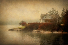 Harmony House (EdBob) Tags: lummiisland lummi island texture textured water washington washingtonstate westernwashington pugetsound pacificnorthwest sea salishsea cove beach beautiful birds cowbirds sanjuanislands nature foggybottom fog foggy art artistic rocks edmundlowephotography edmundlowe trees outdoors whatcomcounty sepia allmyphotographsare©copyrightedandallrightsreservednoneofthesephotosmaybereproducedandorusedinanyformofpublicationprintortheinternetwithoutmywrittenpermission wwwedmundlowephotocom