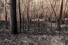 Munarrikolanda (aner.mentxaka) Tags: fire incendio sute 2015 berango sopela munarrikolanda
