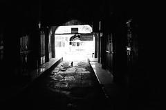 c.a.t. (gato-gato-gato) Tags: 35mm asph holidays ir iso200 ilford iran isfahan leica leicamp leicasummiluxm35mmf14 mp mechanicalperfection messsucher strasse street streetphotographer streetphotography streettogs summilux wetzlar adventure analog analogphotography aspherical believeinfilm black classic film filmisnotdead filmphotography gatogatogato gatogatogatoch homedeveloped manual rangefinder streetphoto streetpic tobiasgaulkech travel travelling white wwwgatogatogatoch isfahanprovince manualfocus manuellerfokus manualmode schwarz weiss bw blanco negro monochrom monochrome blanc noir strase onthestreets mensch person human pedestrian fussgänger fusgänger passant ferien urlaub