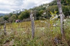 Barn Behind the Fence (Denise @ New Mercies I See) Tags: 2016 autumn october westvirginia fence country countryside onethousandgifts landscape appalachia hambleton tuckercounty fenceline