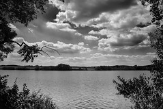Afternoon at the pond (Petr Horak) Tags: bw blackwhite blackandwhitephotos clouds cumulus exterior landscape monochromatic monochrome outdoor outside pond seasons sky summer oboit stedoeskkraj czechia cze