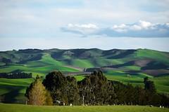 looking into the distance (Gadgetman@Nikon) Tags: elements waimatecanterburynewzealand landscape hills green nikon nikond3300 farmland beautiful interesting lookingintothedistance meechin flickrtoday