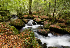 Leaves are falling all around (Through Bri`s Lens) Tags: cornwall kennalvale autumn autumnleaves waterfall rocks brianspicer canon5dmk3 canon1635f4
