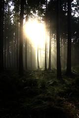Wald im Nebel (danielk83) Tags: wald nebel sonnenstrahlen