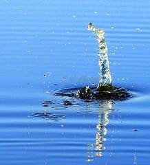 IMG_1909 (morrisoneoin) Tags: water splash blue wet drop drops refections droplets canon 7d