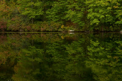 Beside the Still Waters (SunnyDazzled) Tags: green autumn reflections lake water deep contrast glow evening fall harriman statepark newyork kanawauke trees mirror