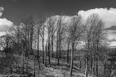 Views of Spey Valley, Cairngorms, Scotland from above Insh Marshes (golferdave2010) Tags: 2016 7d april aviemore blackandwhite cairngorms canon flowersplants landscape mountains scotland snow trees