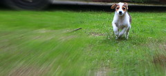 IMG_4571 (Stefania.Coreno) Tags: dogs chien perro pets cani autofocus animals canoneos700d