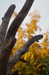 Bois mort dans la lumire (mailyse.bellanger) Tags: bois mort lumire larochelle jaune vert light yellow green wood