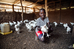 UG1605_195 (Heifer International) Tags: uganda ug