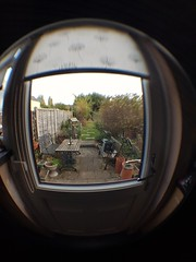 Sunday, 23rd, My birthday present. (tomylees) Tags: fisheye lens garden essex october 2016 sunday 23rd
