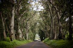 Kauai2016-26