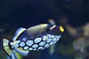colours &  patterns (Rajavelu1) Tags: fish colours patterns design water aquarium singapore collection art aroundtheworld artland canon6d creative nature beautyofnature canonef70200f4llens depthoffield simplysuperb