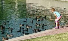 102716-03, Enthralled (skw9413) Tags: arizona redmountainpark child waterfowl ducks coots