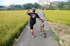 關西市區.老包變形阿怕氣 vs 稻田 (nk@flickr) Tags: friend taiwan hsinchu cycling 新竹 20161105 台湾 guanxi bobby 台灣 關西 canonefm22mmf2stm